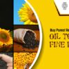 Healthiest Cooking Oil in Chennai